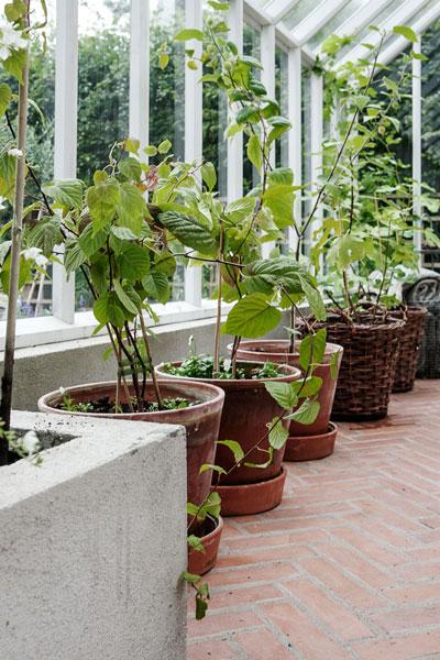 Odlingsbädd och krukor i växthus