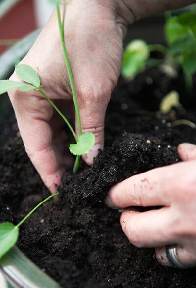 omskolning av växter