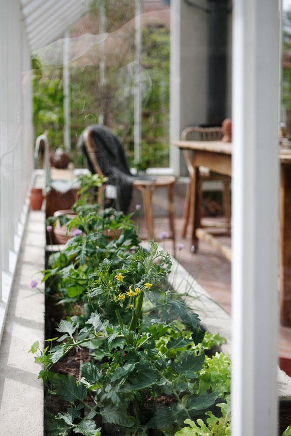 Odlingar i växthus
