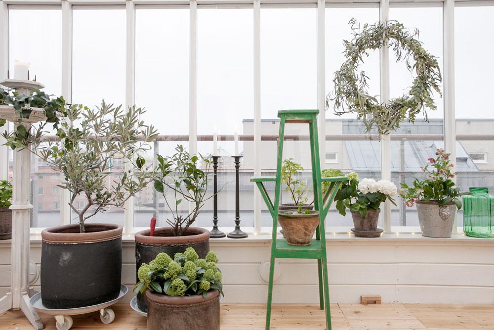 Krukor och växter i växthus på terrass.
