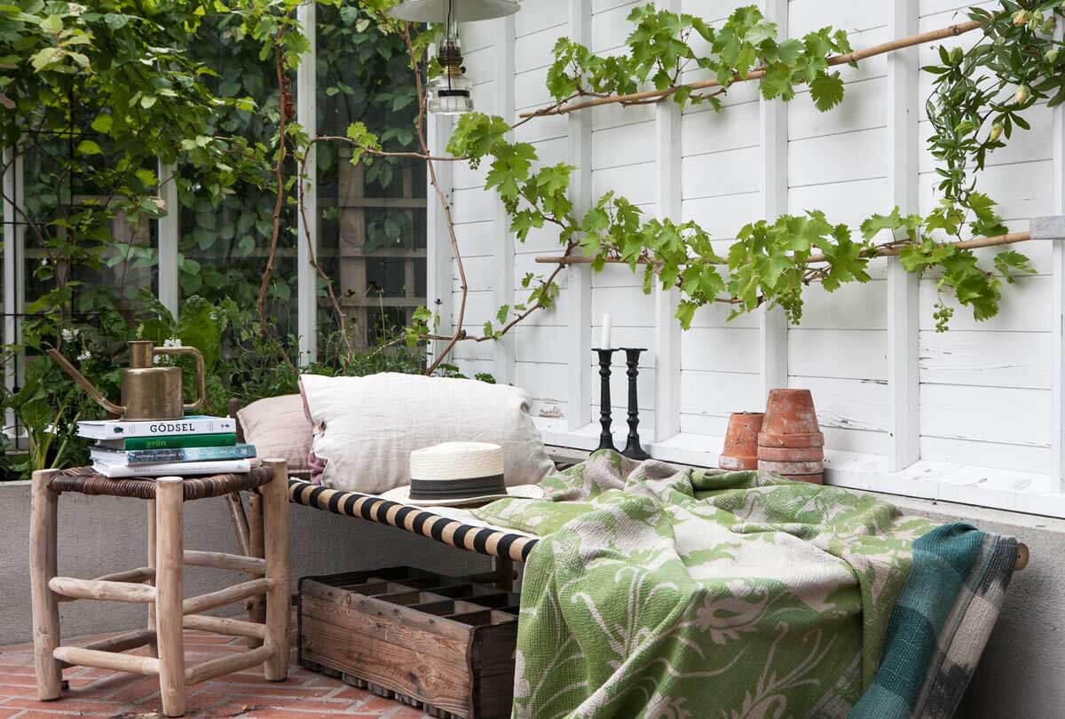 Dagbädd och vinranka i växthuset