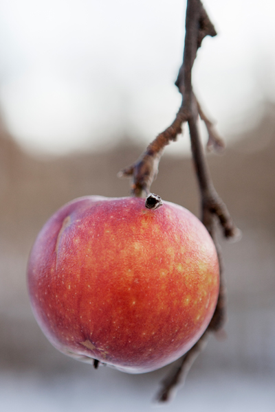 ett vinteräpple