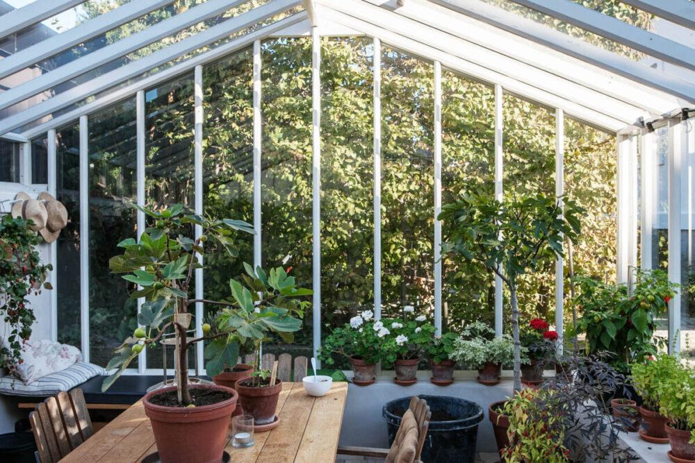 Växter inuti ett växthus