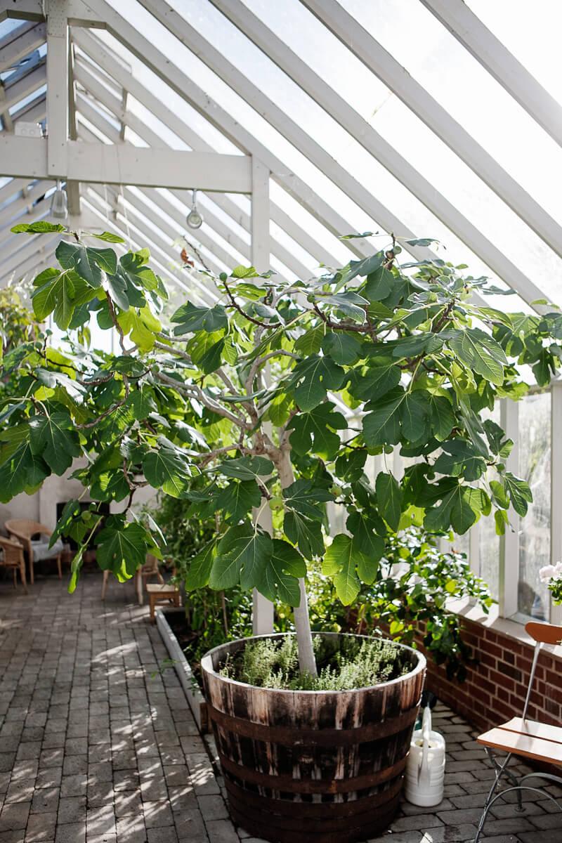 Växter i ett stort växthus