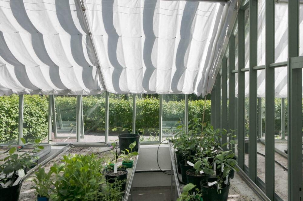 Skuggardiner i växthuset
