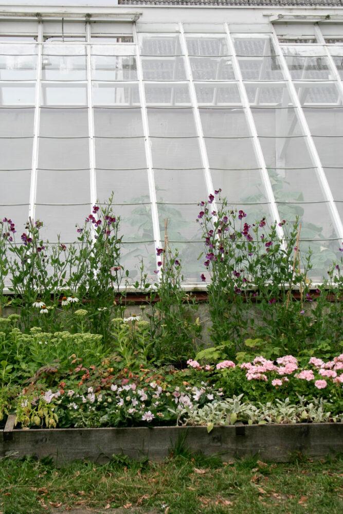 utsidan av ett växthus med rabatt framför.