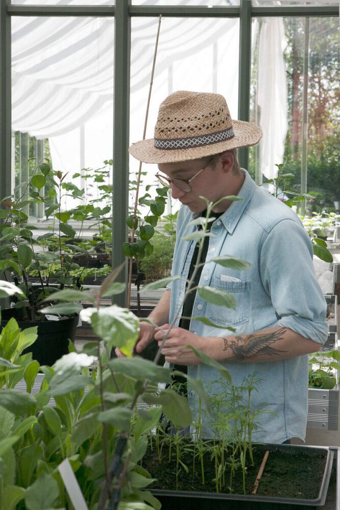 En man odlar i ett växthus