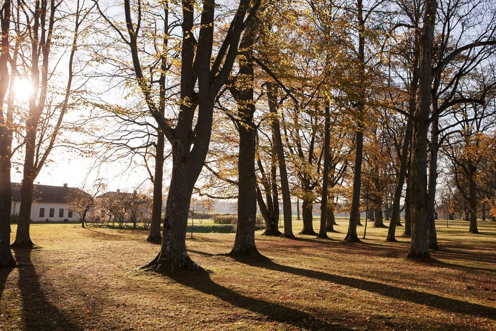 Parken som man möter innan man kommer fram till Stjernsunds slott.