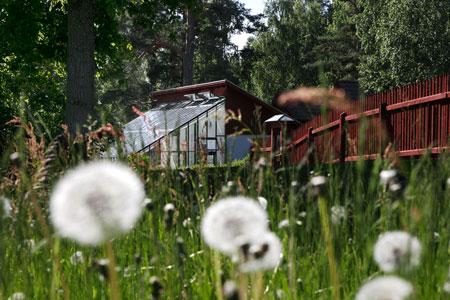 Växthuset som vi byggt mot vägg på Staberg bergsmansgård utanför Falun.