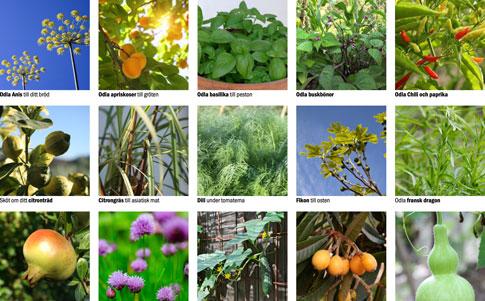 Odlingskort för odling i växthus.