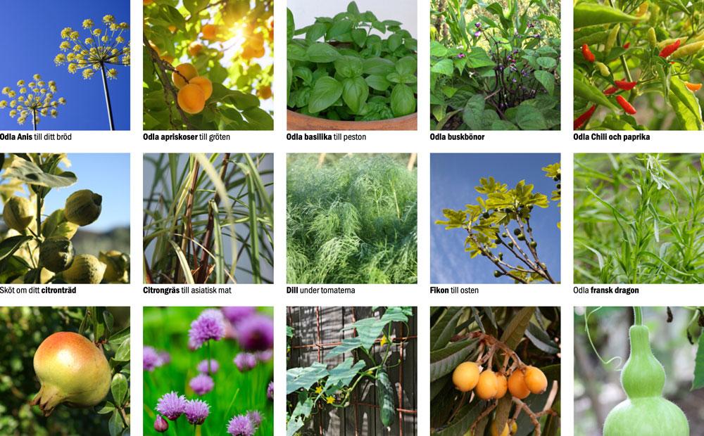 Odla i växthus med våra odlingskort.