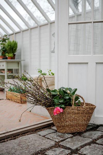 Backsippor i växthus