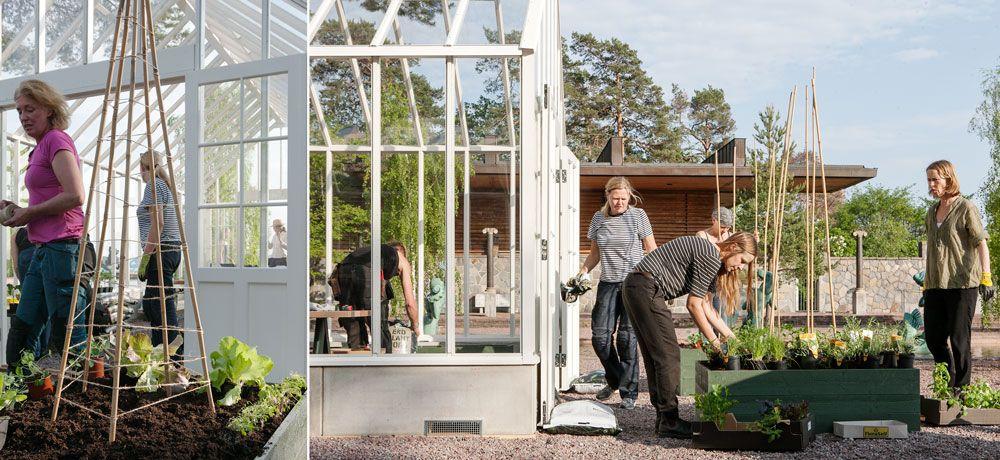 Plantering pågår i växthuset på Millesgården