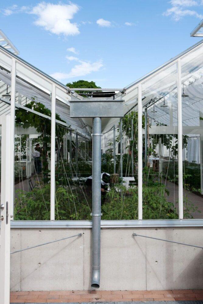 Ihopkopplat växthus