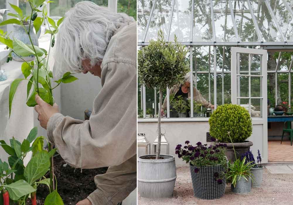 Cathrine planterar i växthuset.