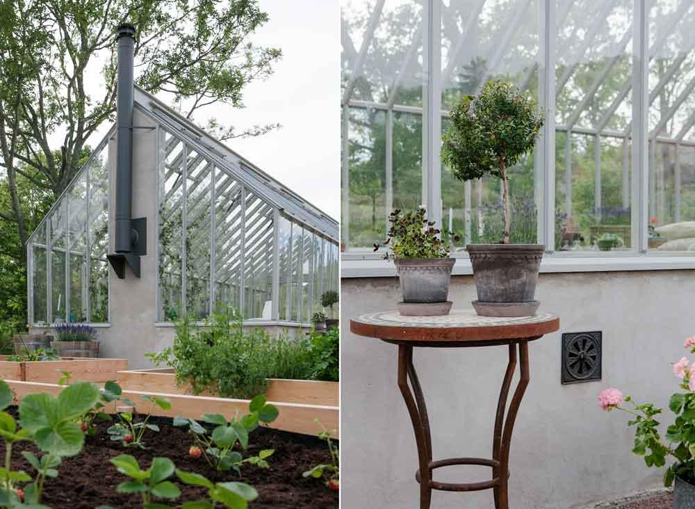 Växthuset sett från gaveln med skorstenspipan och det lilla bordet med myrtenträd samt klöver.