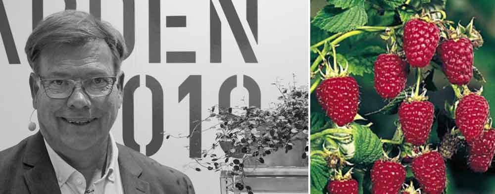Leif Blomqvist, trädgårdsmästare som älskar hallon.