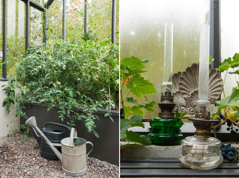Upphöjda odlingsbäddar fyllda med tomater och fotogenlampor.