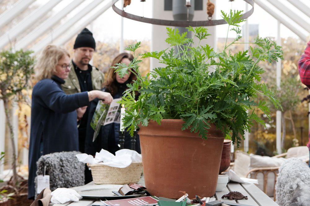 Två kvinnor och en man är fördjupade över en broschyr om växthus.