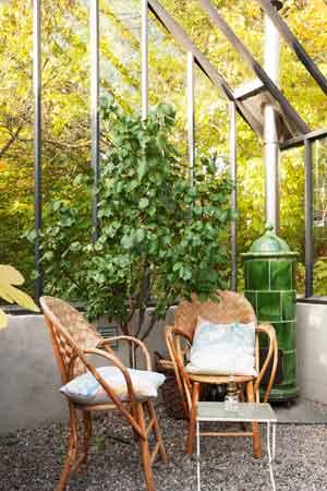 rottingstolar, kakelugn och persikoträd i ett växthus.