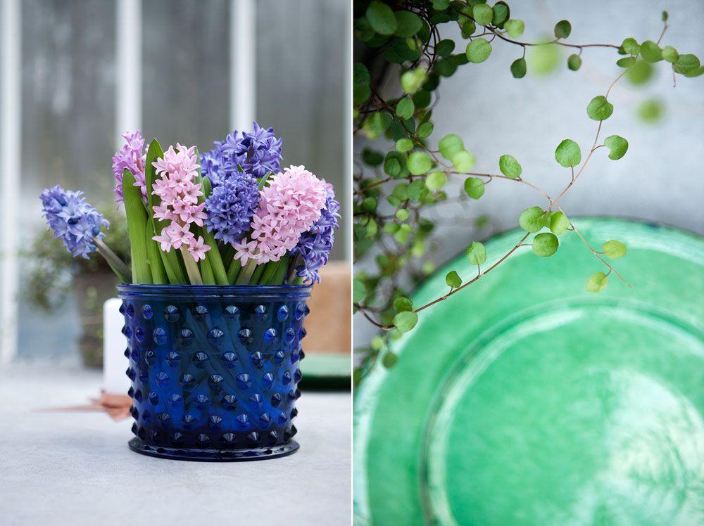 Blå Hoprtuskruka och grön planat tillsammans med grönt fat.