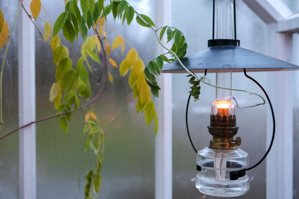 Tänd fotogenlampa i växthus.