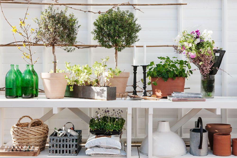 Arbetsbänk i växthus.