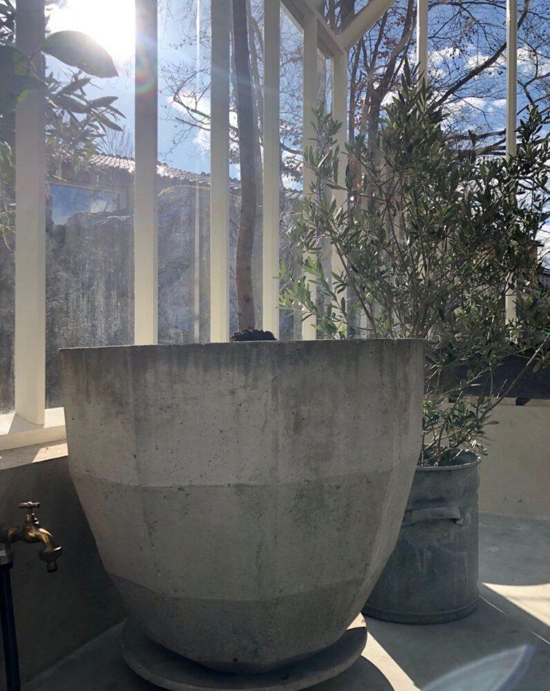 Betongkruka i växthus