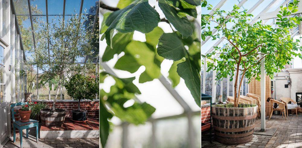Krukplanteringar i växthus.