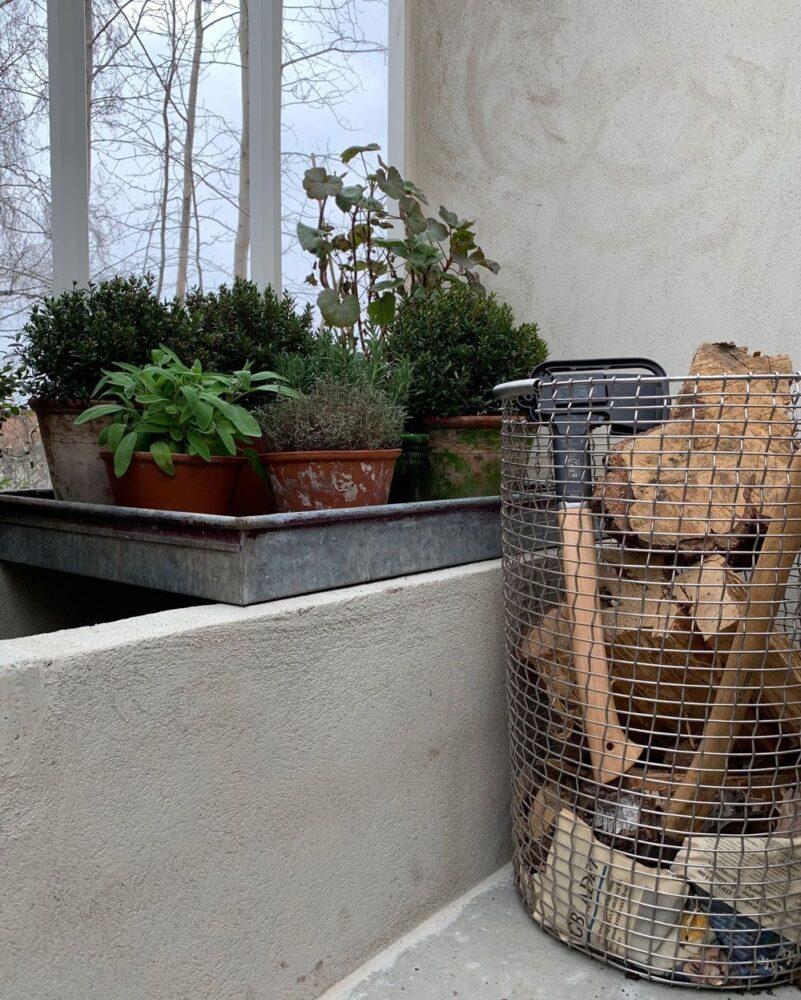 kryddor på zinkfat i växthus.