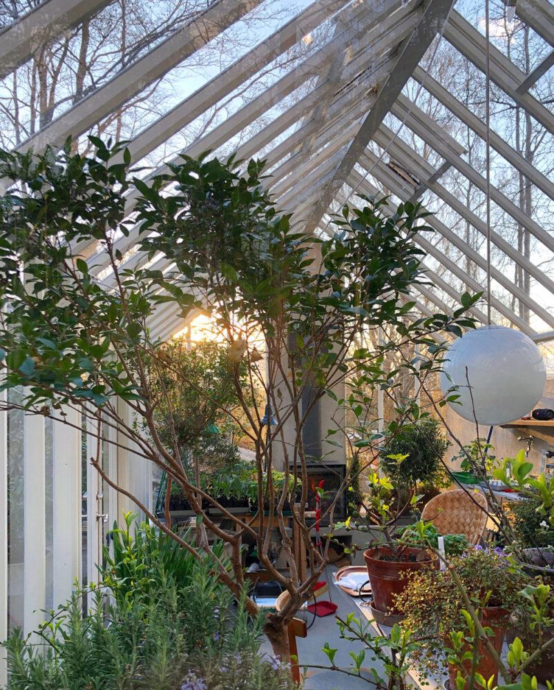 Krukodlade växter i växthus