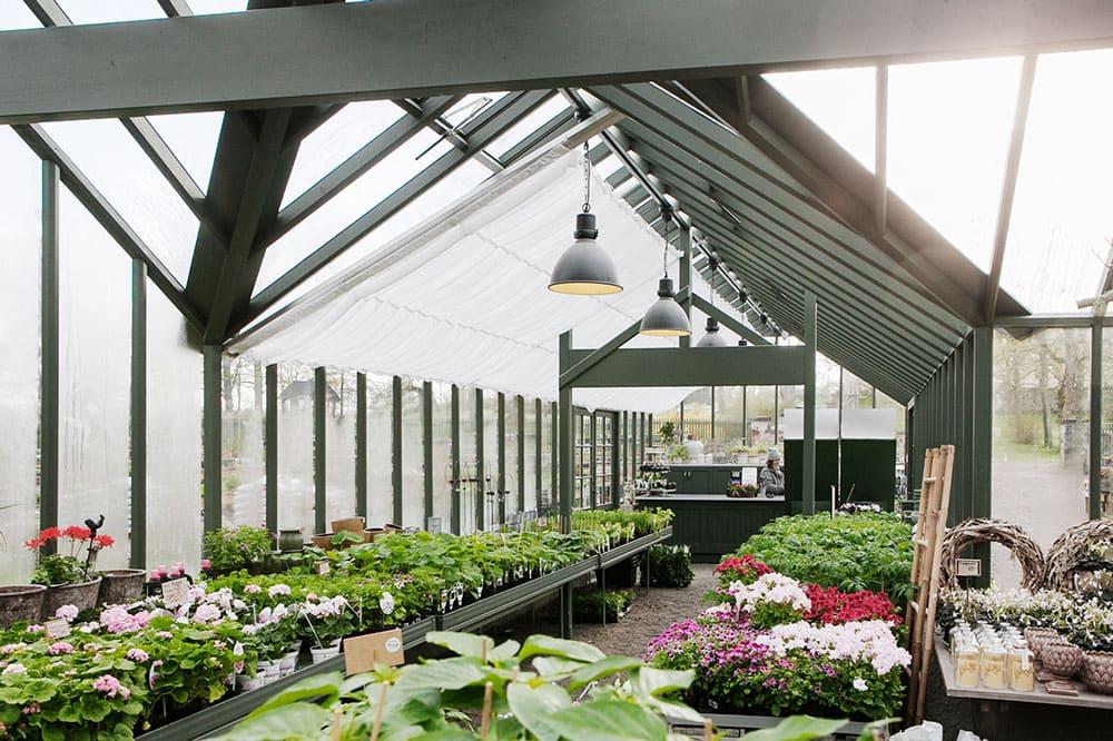 Interiör av växthus.