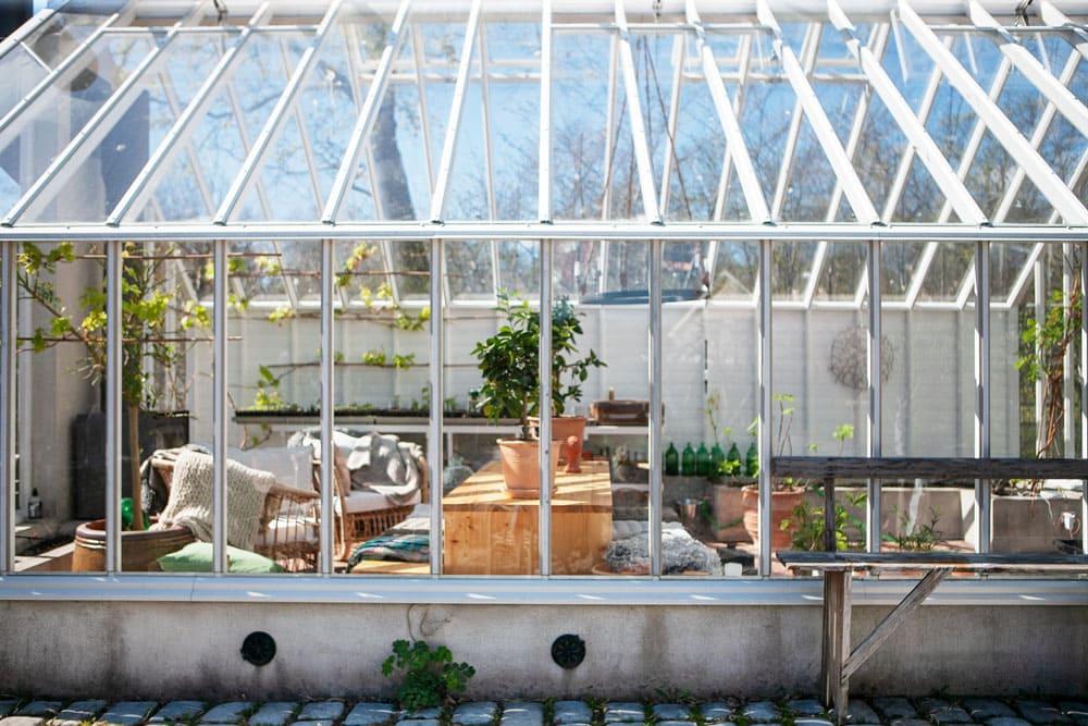 Mangold som dekoration framför växthuset i trä och glas.