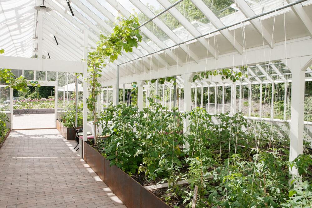 Stora odlingsbäddar i växthuset