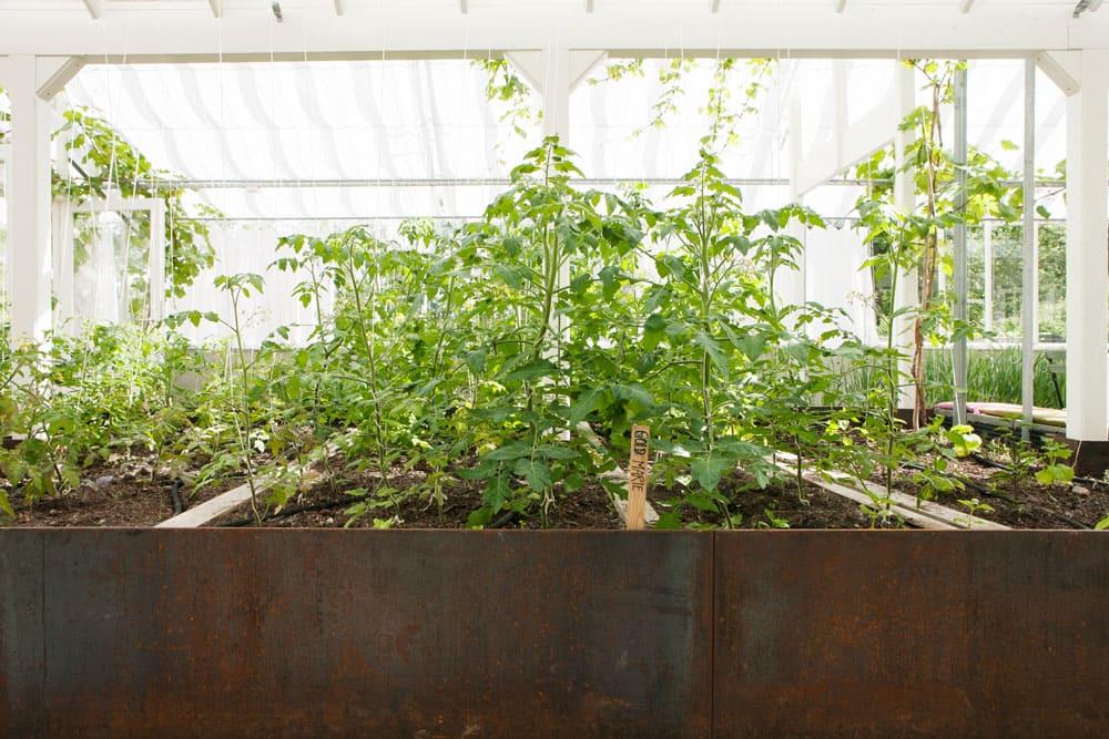 Upphöjda jordbäddar i växthus.