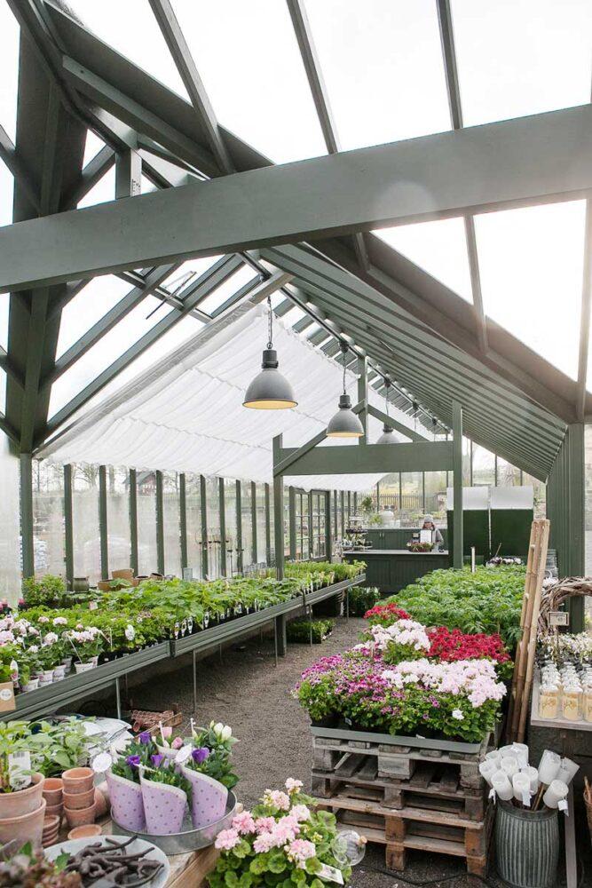 Blommor i ett långt växthus