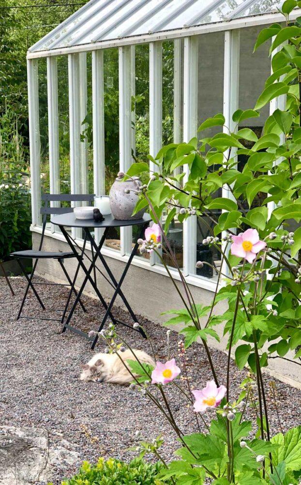 Katt, bord, stol och ett växthus