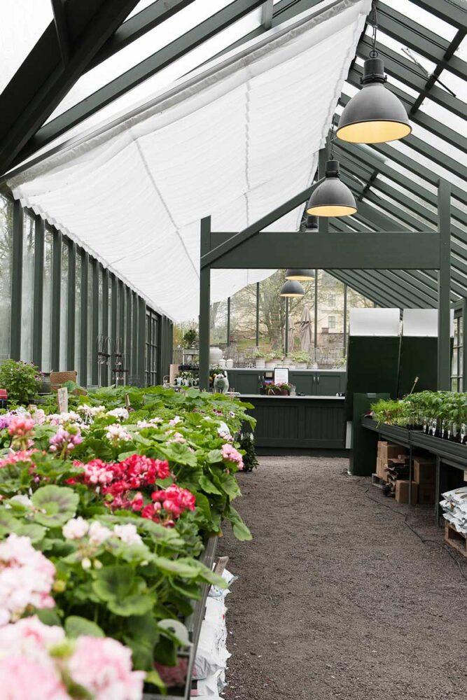 Blommor i ett växthus med skuggardin
