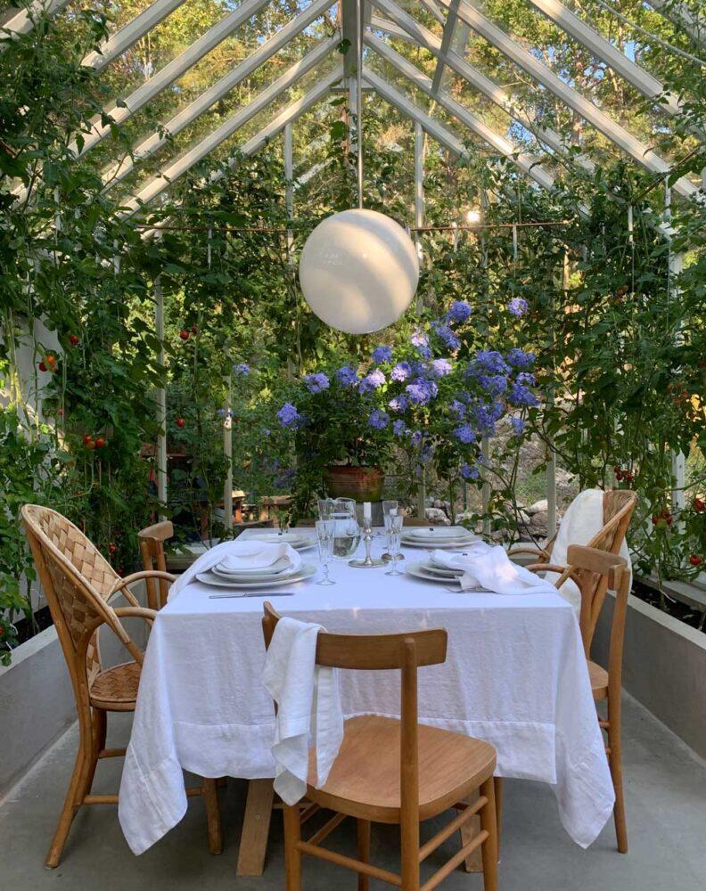 blå blyblomma på dukat bord i växthus.