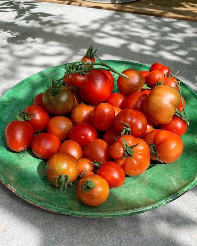 Keramikfat fyllt med tomater.