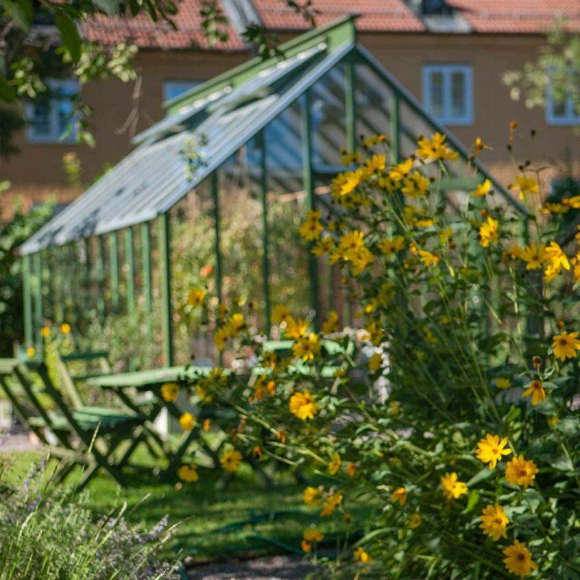 ett grönt växthus bakom tuva med gula blommor.
