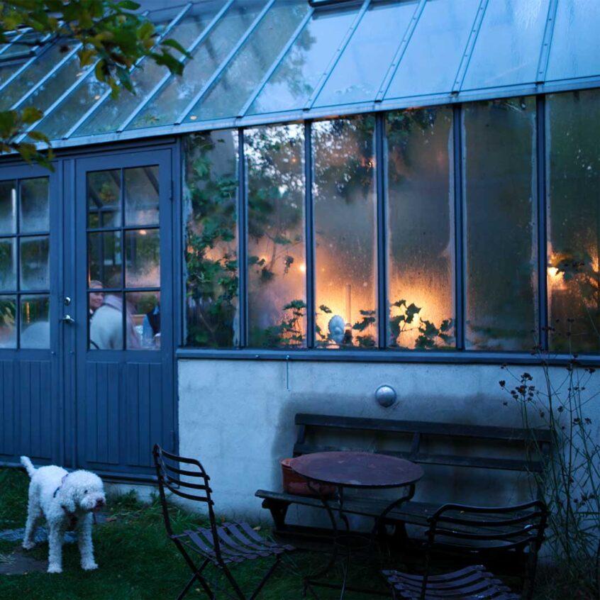 Vit hund framför grått växthus.
