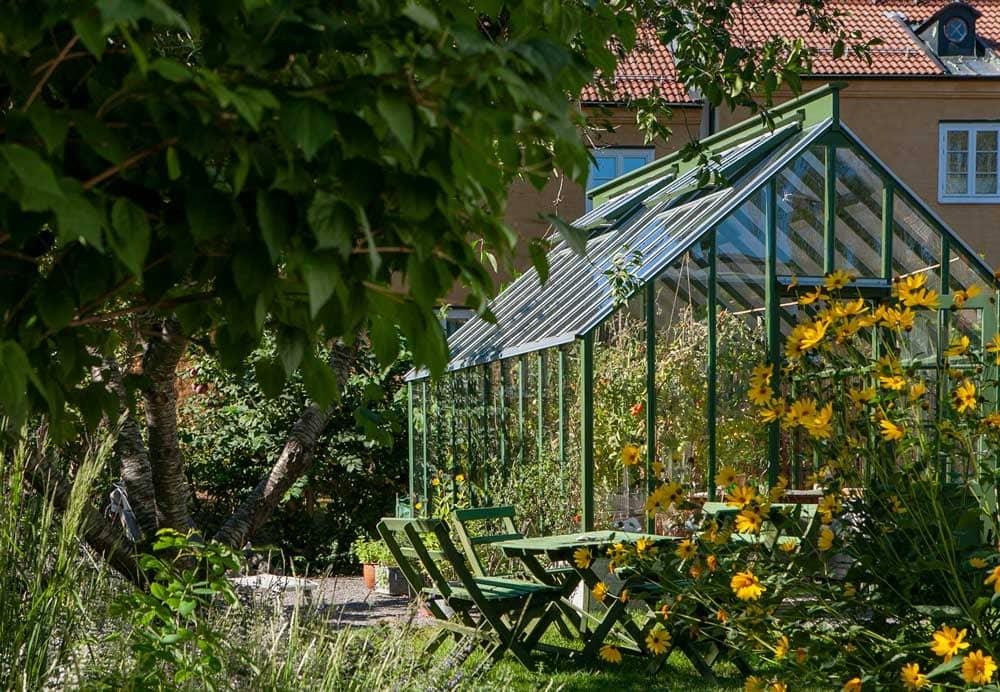 Grönt växthus och gula blommor.