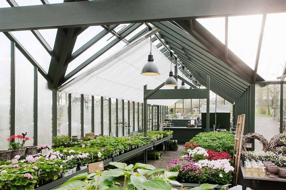 Interiör av stort grönt växthus i vinkel.