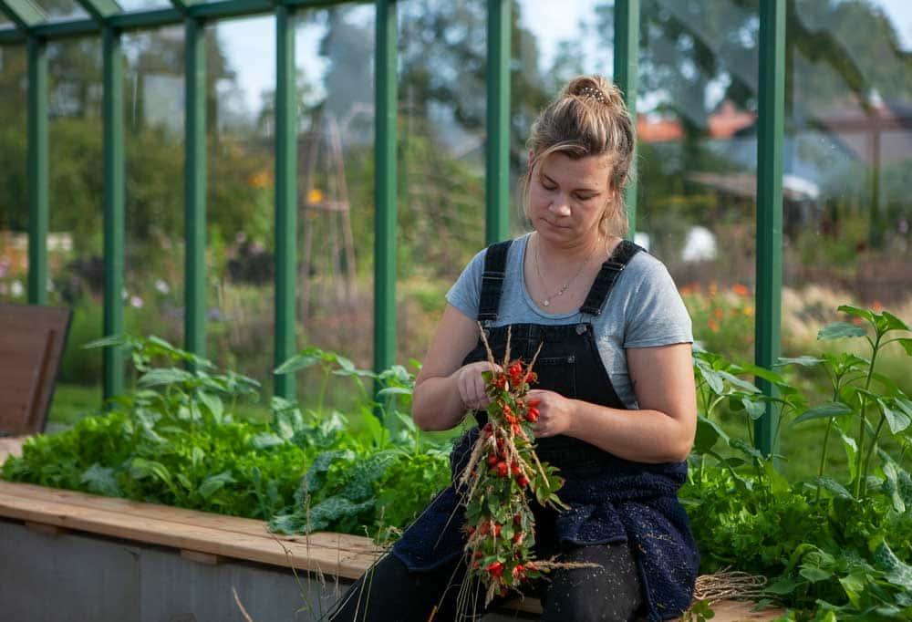 Kvinna binder nyponkrans i växthus.