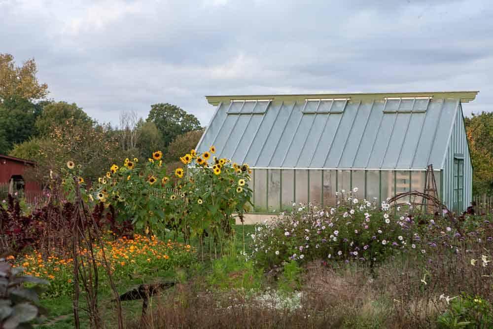Sommarblommor framför växthus.