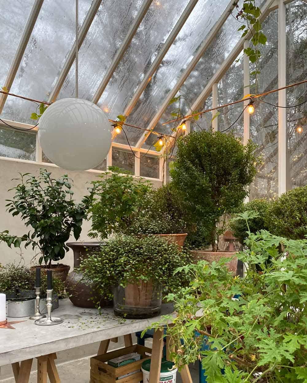Grön växtlighet i växthus.