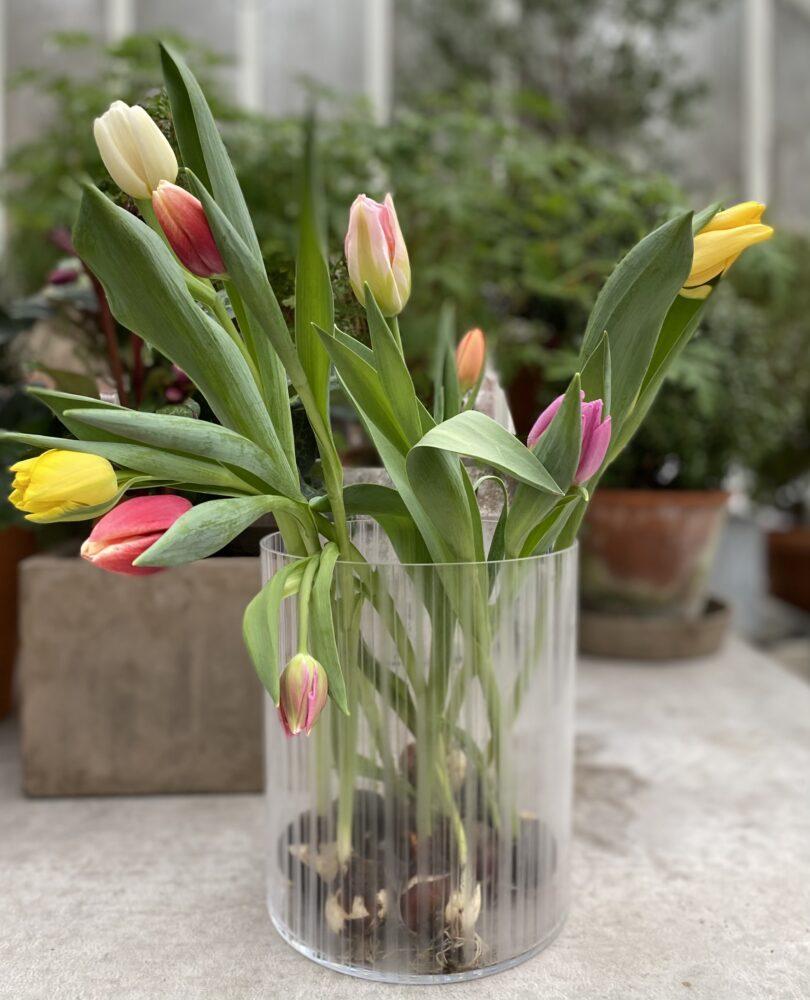 Blommor i glas