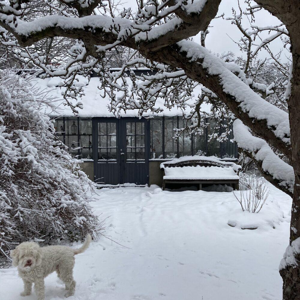 Ett växthus på vintern och en hund