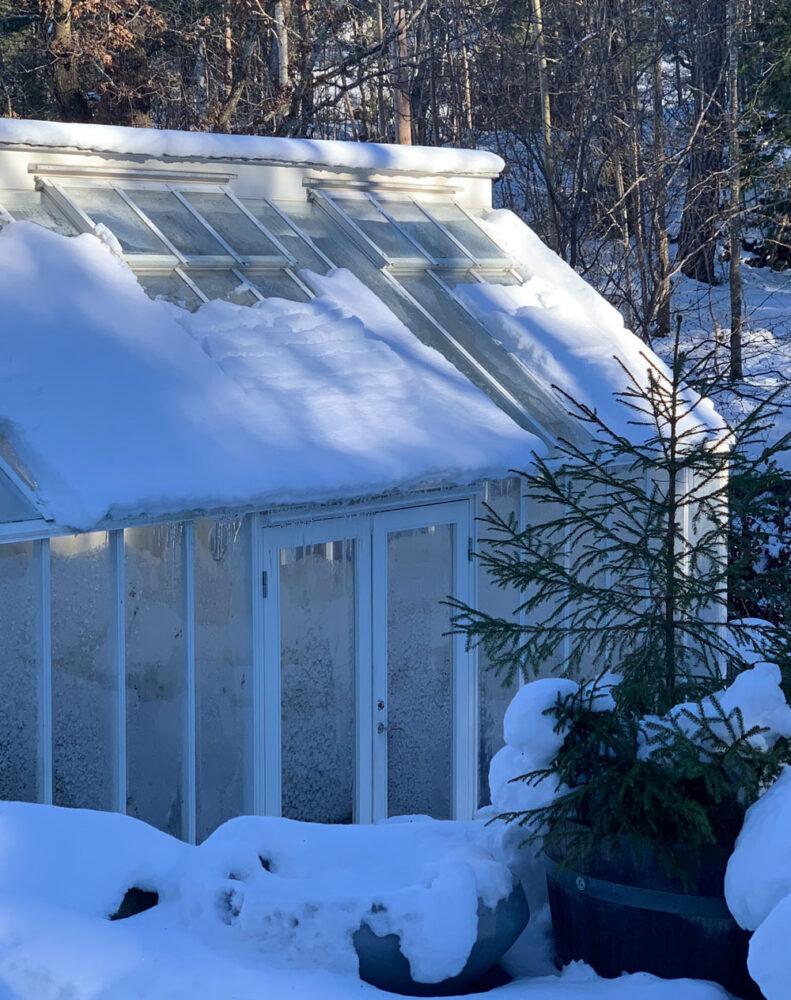 Växthus täckt med snö och is.